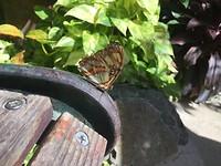 Vlinder en bank