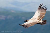 vultures (geen foto van mij)