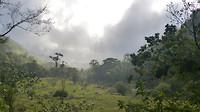 Nevel trekt over het regenwoud