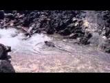 Galapagos - Marine leguanas