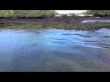 Galapagos - lagune met zeehonden
