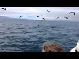 Galapagos - orka's onder boot