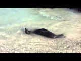 Galapagos - Spelende zeehond