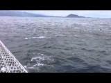 Galapagos - Dolfijnen