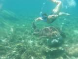 Snokelen met zeeschildpadden, GEWELDIG!