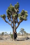 Joshua tree in het national park