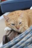 Catito, de bizar slimme huiskat aan boord