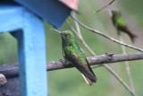 Tientallen kolibries op de top van Valle de Cocora