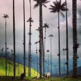 Iets klopt er niet in deze adembenemende vallei, koeien en palmbomen? ;)