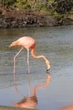 De flamingo's stoorden zich totaal niet aan ons, we zaten vlak aan de waterkant van het meertje