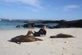 Chillen op het strand met de zeeleeuwen :)