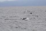Dolfijnen naast de boot tijdens het varen