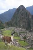 Wat is Machu Picchu zonder poserende lama? ;)