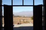Uitzicht op wijngaard vanaf de bodega