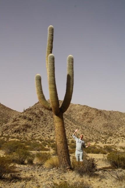 Grootste cactussen die wij ooit zagen..