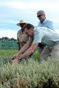 Sofie helpt bij het stekken van inheemse planten