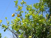 Overal fruitbomen