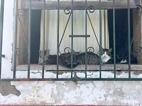 Kattenhuis?