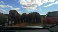 Addo Elephant Park 🤩 🐘