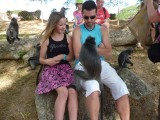 De aapjes