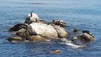 Zeehonden bij Monterey Bay Aquarium