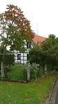 De Rus (fluweelboom) in herfstkleuren