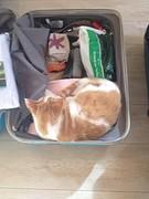 Tijgertje wil ook mee op reis!