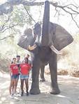 Elephan Whisperer