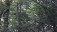 Vlog 2; t/m Graskop