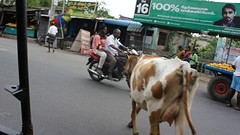 2016-06-19 Riksha naar Kansipuram-20