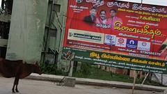 2016-06-19 Riksha naar Kansipuram-23