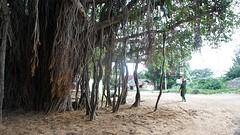 2016-06-19 Riksha naar Kansipuram-50