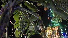 2016-07-05 Kattaikkuttu Kuranvanji-46k