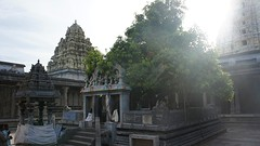 2016-09-22 Ekambareshware tempel-58