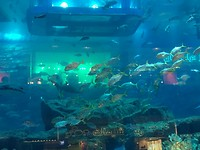 Aquarium shopping mall