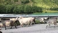 File door geiten 🐐🐐🐐