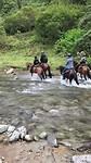 Met de paarden door de rivier!