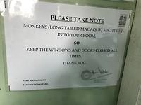 Brutale makaken