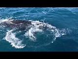 Whalesong Hervey Bay
