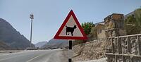 Pas op geiten op de weg