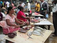Vismarkt Negombo