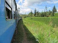 Treinreis door de theeplantages
