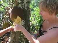 San proeft de jackfruit