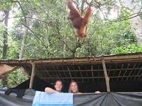 Orang oetan boven ons hutje