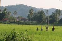 En nog eens een rijstveld met altaartjes