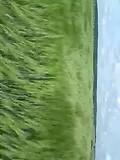 wuivend koren