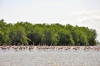 Flamingo's at Bigi Pan