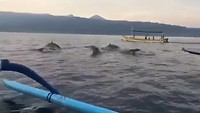 Jumping dolphins in Lovina