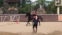 Faya in a gallop
