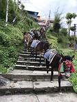 Stairway of donkeys